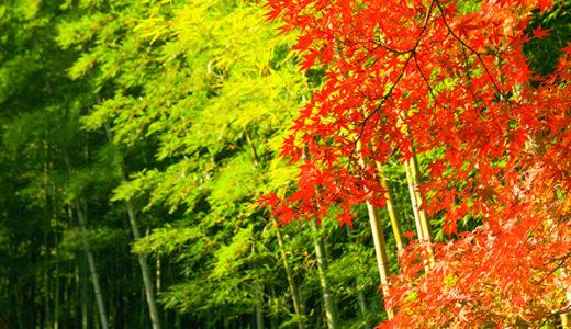 写真でお送りする早朝の京都嵐山
