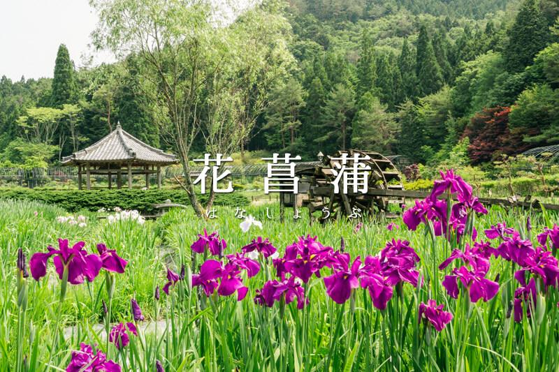 日本を感じることができる美しい庭園をもつ永沢寺花しょうぶ園
