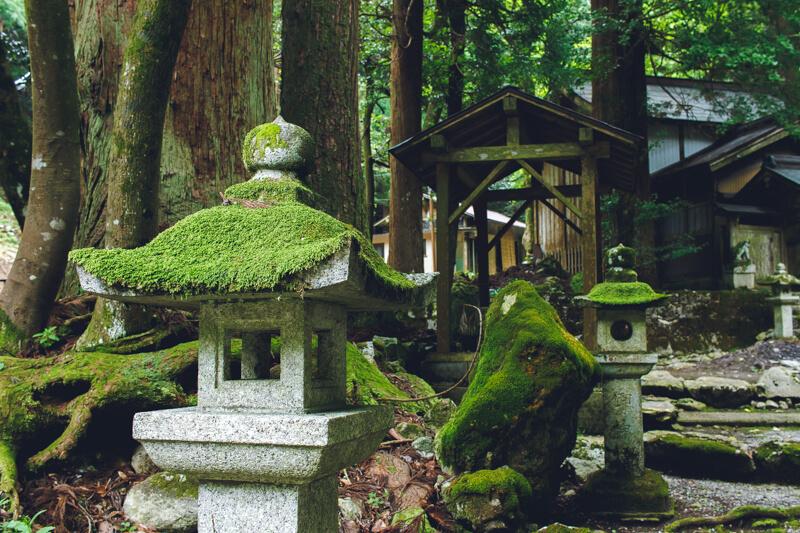八幡神社の苔