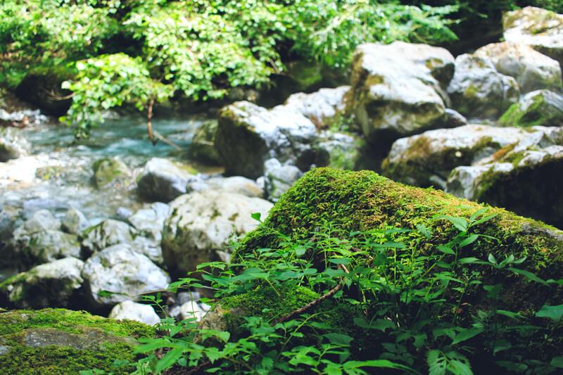 川沿いの岩