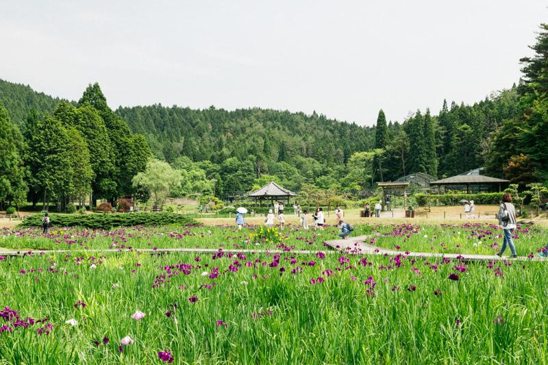 菖蒲のある風景1