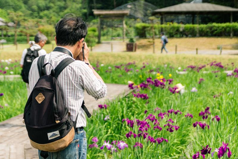 菖蒲のある風景2