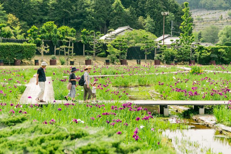 菖蒲のある風景9