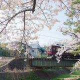 夙川の桜と阪急電車1
