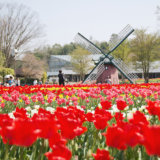 チューリップが見頃!兵庫県立フラワーセンターで色とりどりの春を満喫しよう
