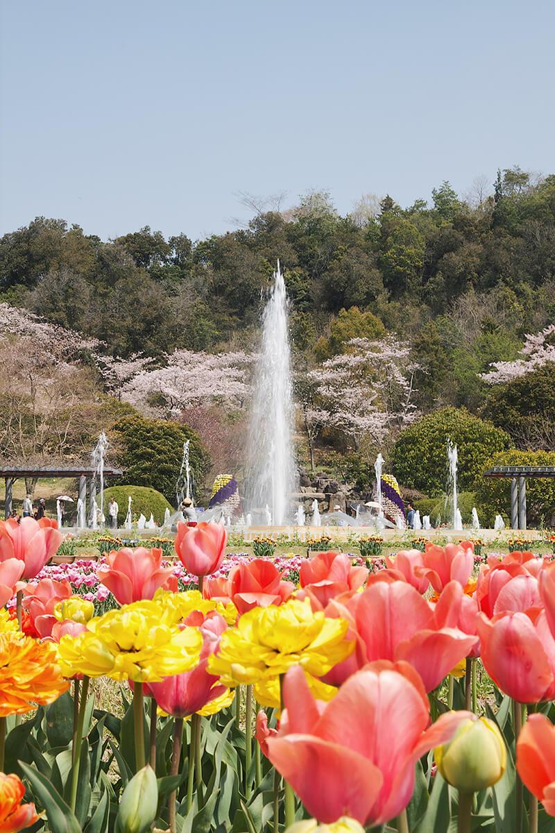 兵庫県立フラワーセンターのチューリップと噴水