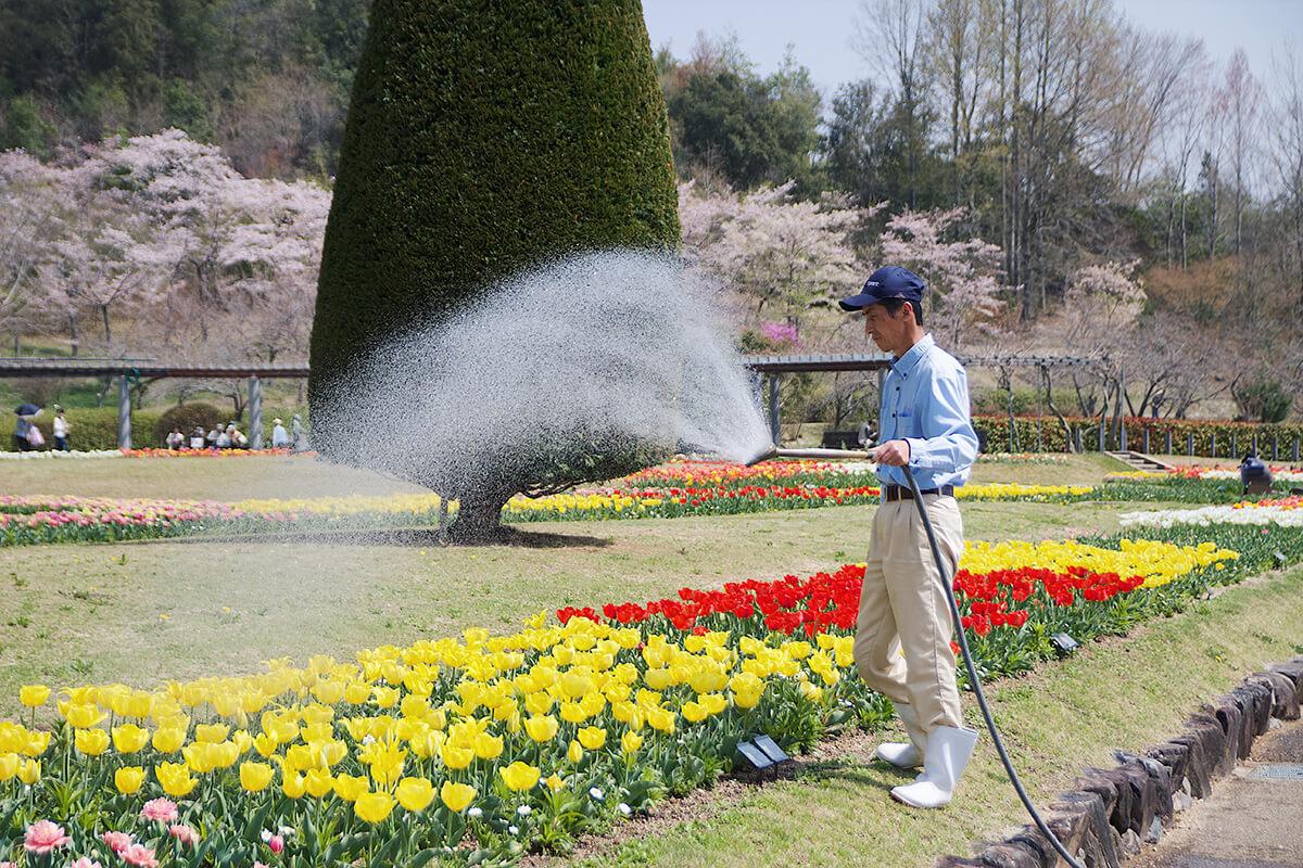 兵庫県立フラワーセンター水撒き