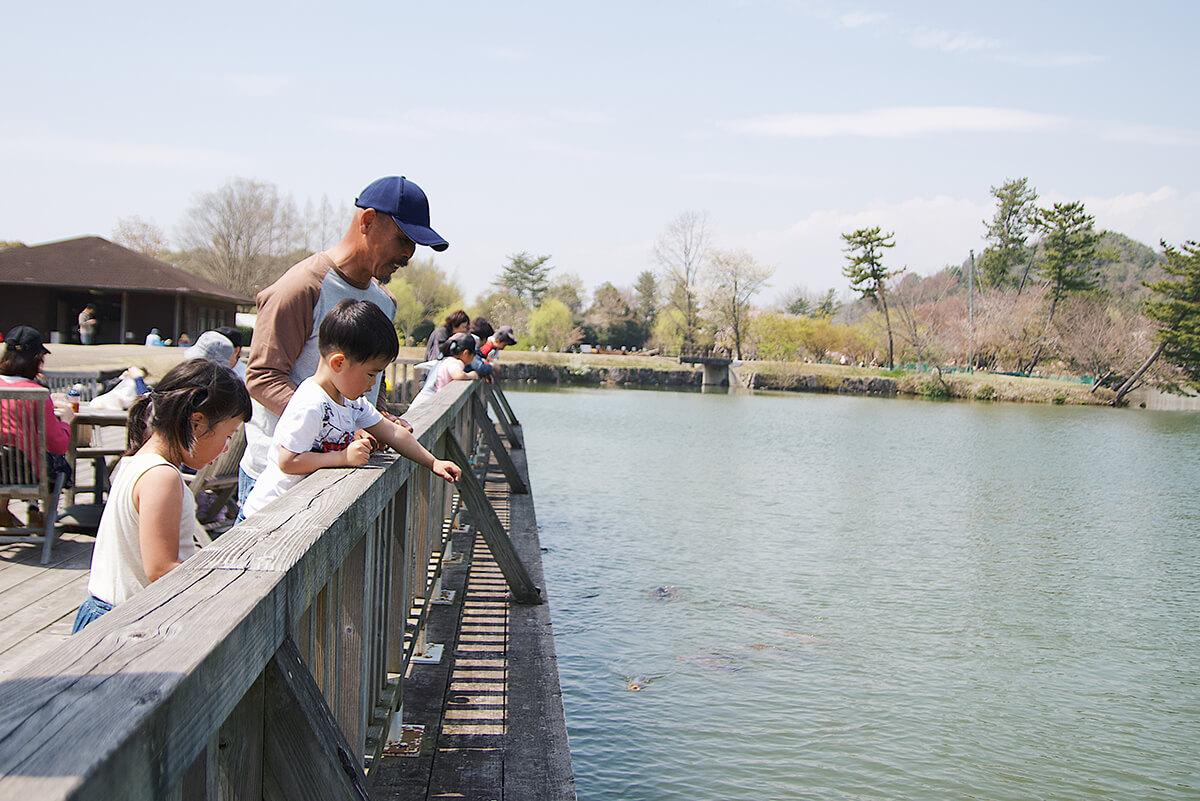兵庫県立フラワーセンター鯉