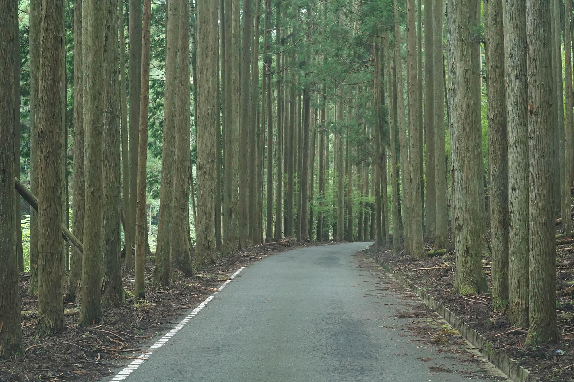 山崎アウトドアランドへの道の写真1