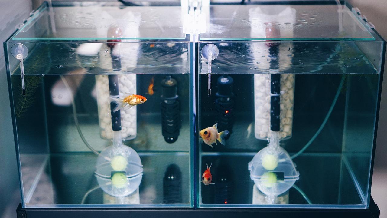 金魚水槽レイアウト