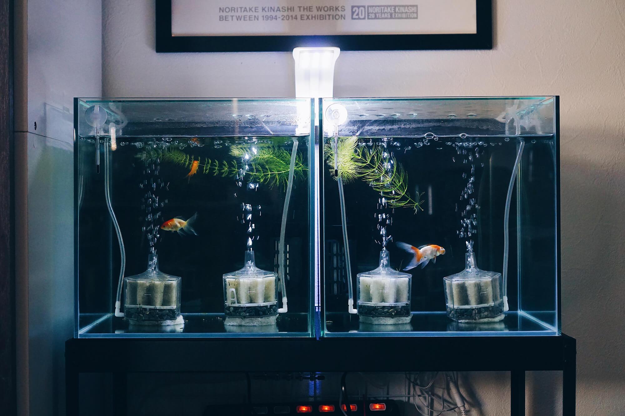 金魚水槽1